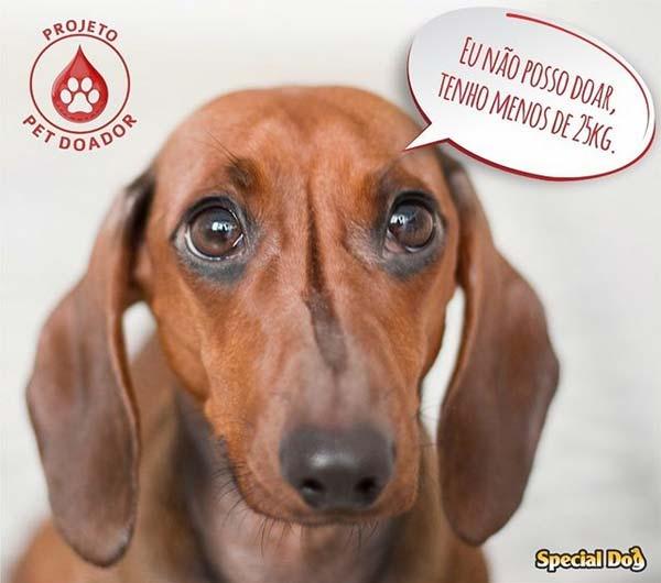 laboratorio-veterinario-vetex-projeto-pet-doador-cachorro-menos-25kg-nao-pode-doar-sangue