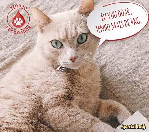 laboratorio-veterinario-vetex-projeto-pet-doador-gato-mais-4kg-pode-doar-sangue