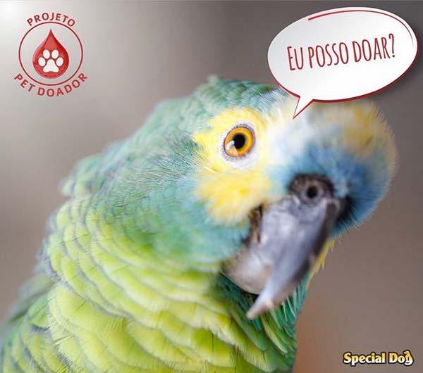 laboratorio-veterinario-vetex-projeto-pet-doador-papagaio-pode-doar-sangue
